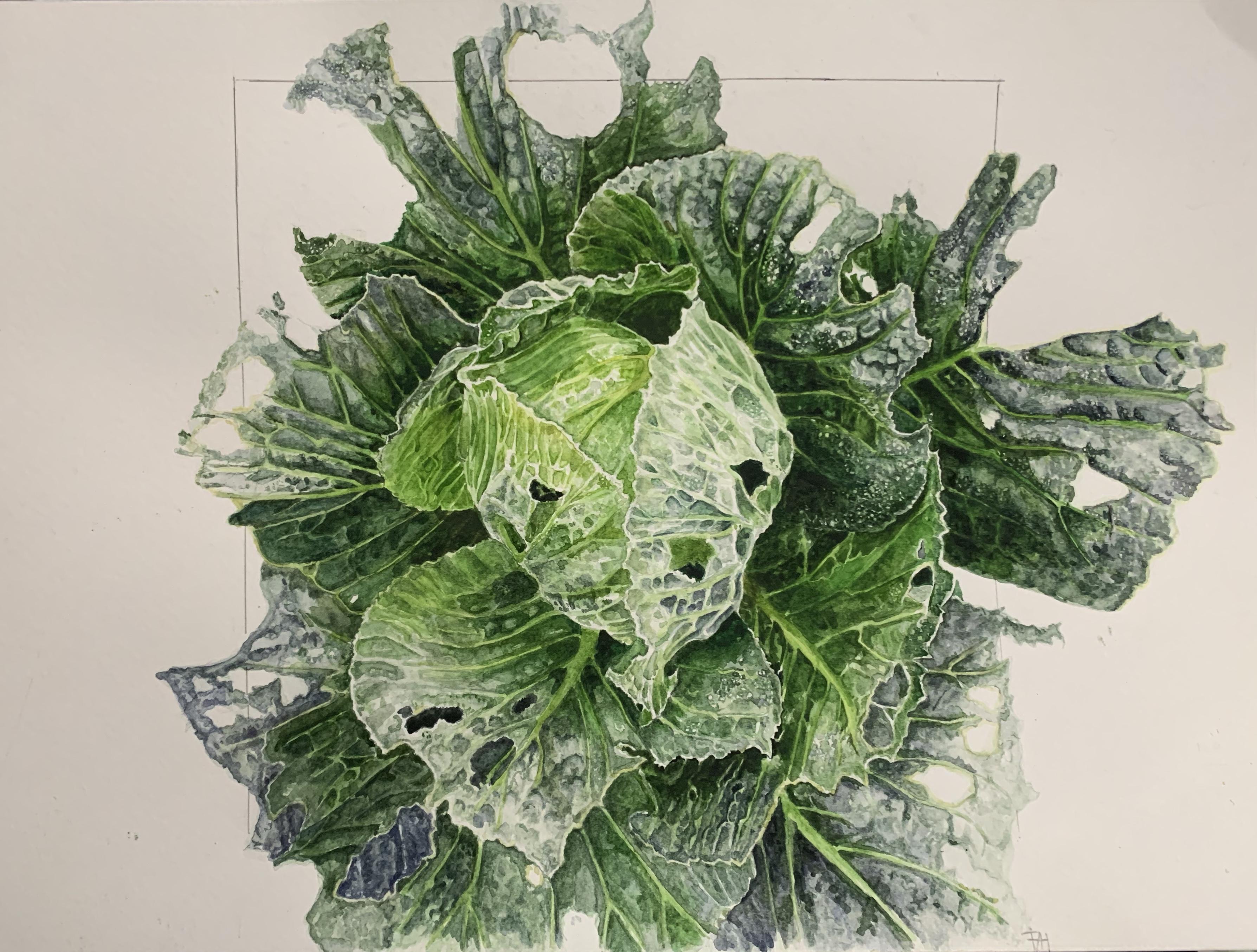 caterpillar cabbage watercolour