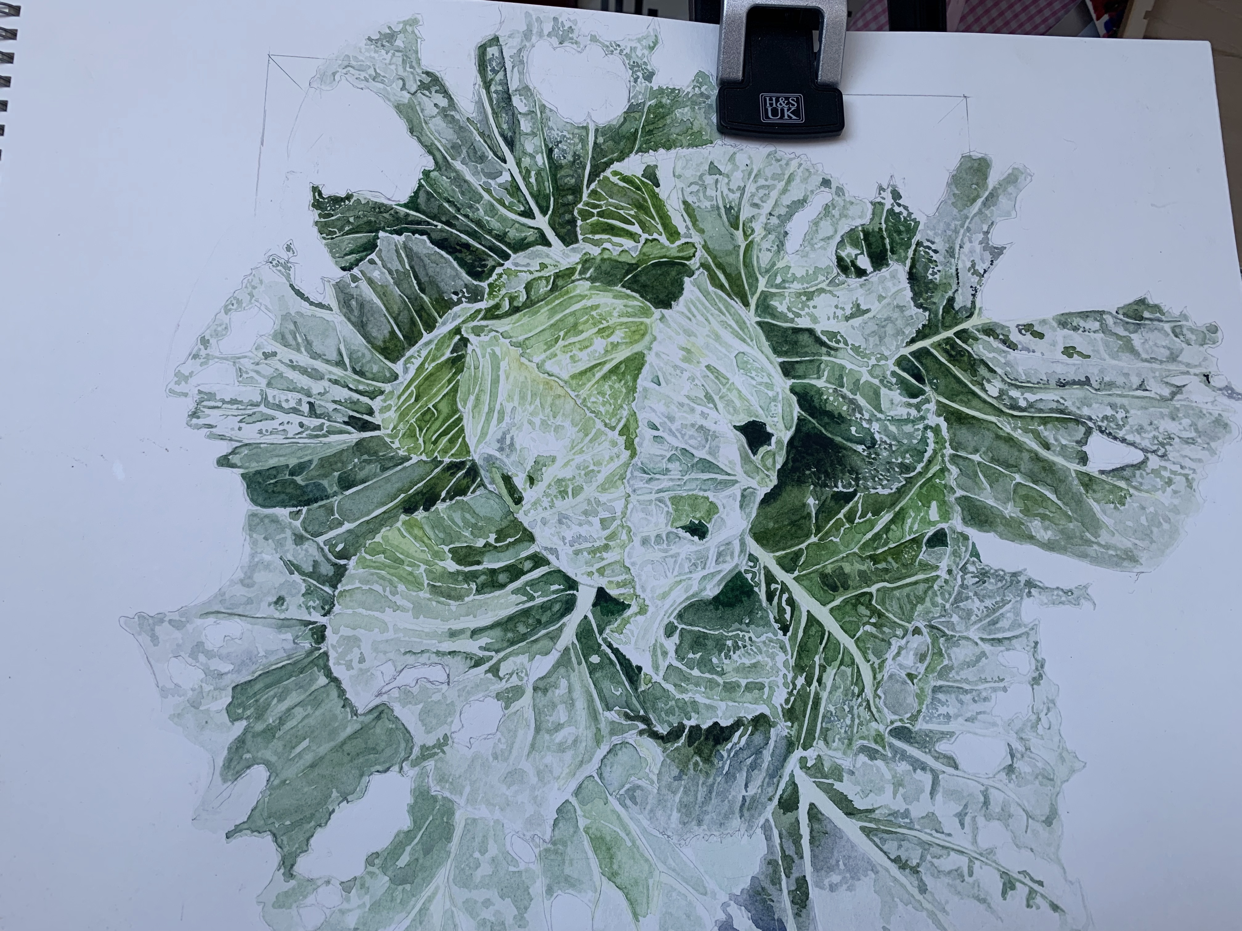 Stage 2- cabbage watercolour